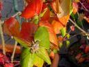 Herbs_Laub640