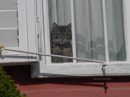KatzeFenster.jpg